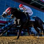 Betting for an Upset in the Delaware Handicap