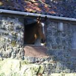 Horse Lover's Guide to Staying Inside, Part 3