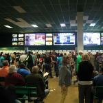It's in the Numbers: How Horse Racing Can Appeal to Sports Bettors