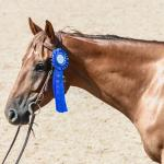 Thoroughbred Makeover Diary: Do You Believe in Coincidences?