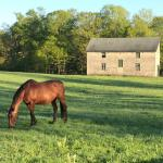 Visit Horse Country: Runnymede's Century and a Half of Excellence