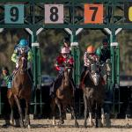 Haskin's Derby Dozen for Feb. 15
