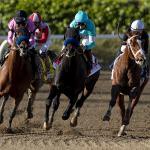 America's Best Horses for Feb. 22