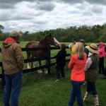 Visit Horse Country: Raising Star Racehorses at Saxony Farm