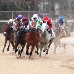 Haskin's Derby Dozen for Feb. 19