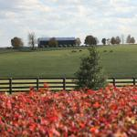 Visit Horse Country: Stone Farm's Legacy of Champions