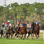 Where to Watch/Listen: Horse Racing Coverage for Feb. 18-22