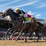 Getting to Know Breeders' Cup Distaff Hopeful Vexatious