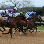 Where to Watch/Listen: Horse Racing Coverage for Feb. 25-March 1