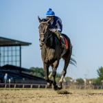 Elate Powers to Repeat Victory in Delaware Handicap