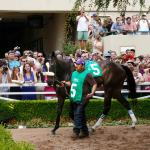 Grow Horse Racing's Fanbase By Promoting Superstar Fillies
